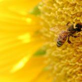 Jak postavit včelín