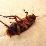 Jak se zbavit švábů v domácnosti