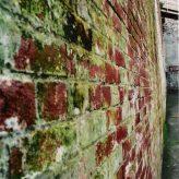 Jak na odstranění plísně na zdi